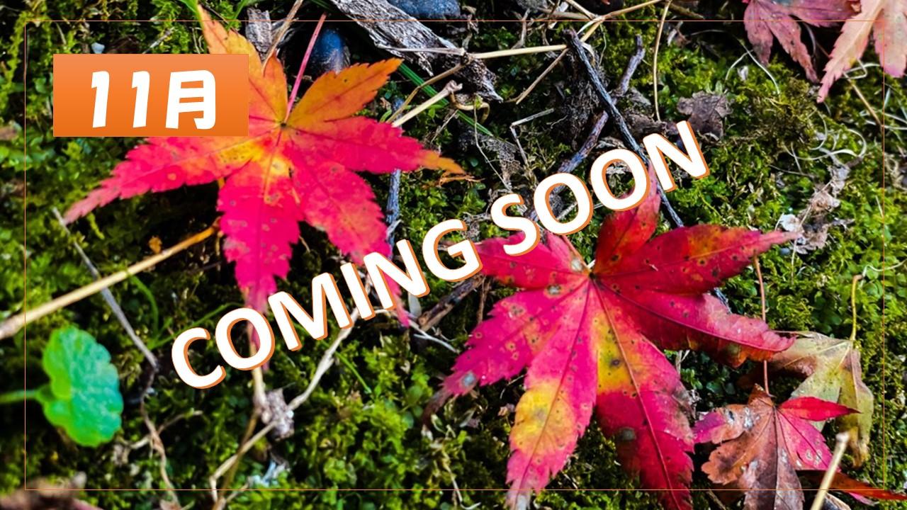 【京都】11月 京都の最新紅葉情報