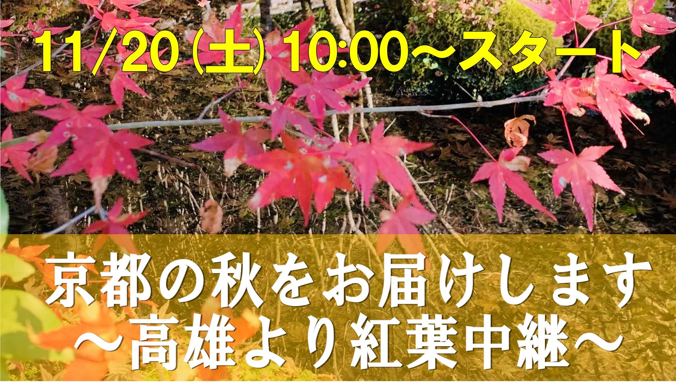 【京都】11/20(土)10:00~『京都の秋をお届けします~高雄より紅葉中継』